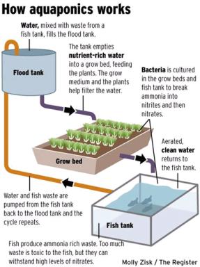 Media-Based-Aquaponics-System