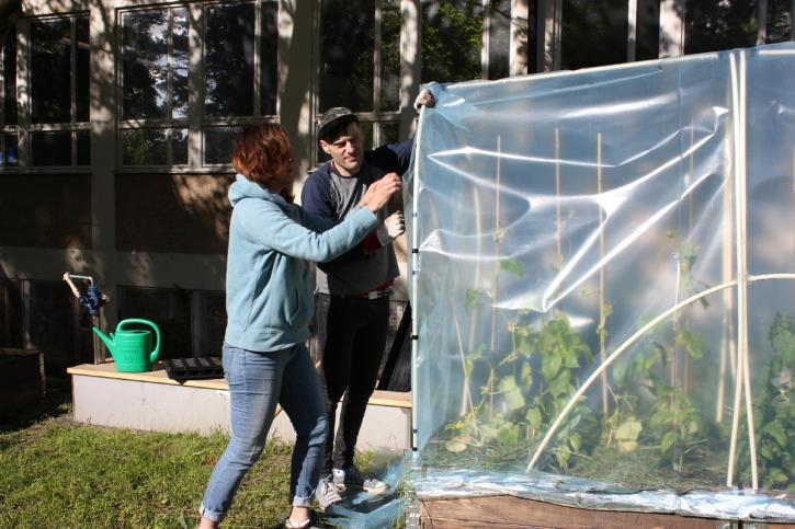 miniväxthusen till gurkor och tomater början av juni