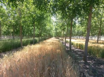 Samplantering Spanien