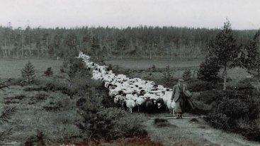 Wåhlsteds gård arkivbild