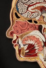 anatomy-11-lisa-nilsson